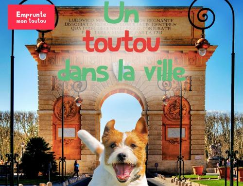 Toutou dans la ville: Dijon