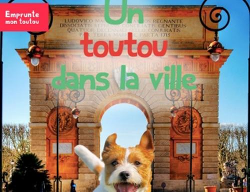 Un toutou dans la ville : les chiens à Reims