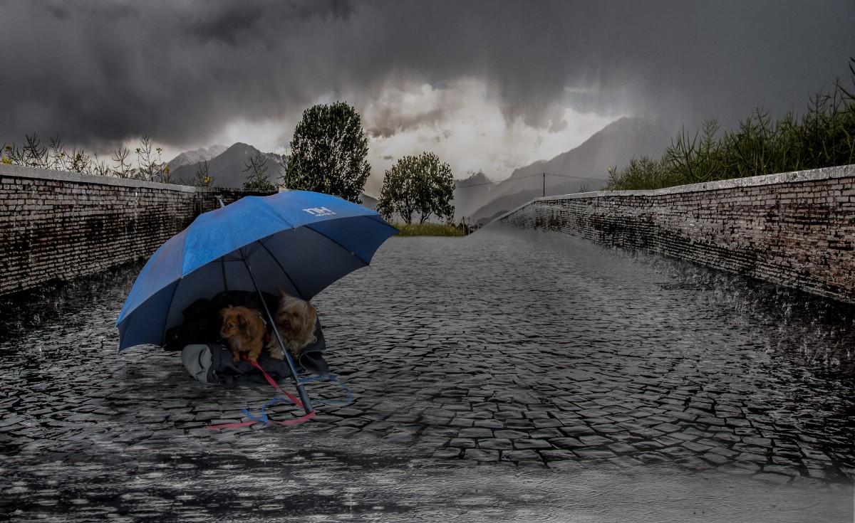 Les 5 activités à faire avec son chien quand il pleut