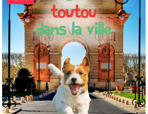 Toutou guide : MJ The Beagle à Toulouse