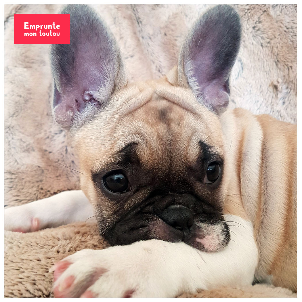 Les caractères de nos chiens : la jalousie - Emprunte Mon