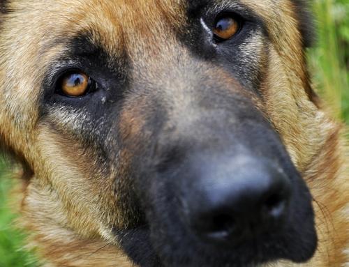 «Je dois ma vie à ce chien, j'en suis sûr quand j'y pense.»