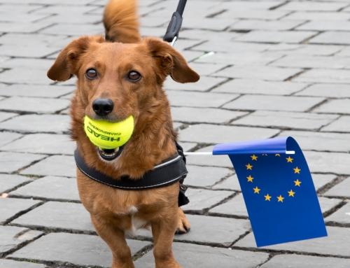 Les toutous par continent : les chiens en Europe occidentale