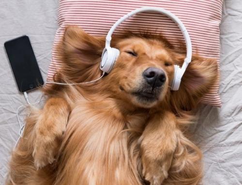 La musique et les chiens