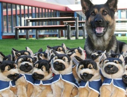 Les chiens policiers : l'atout(ou) charme