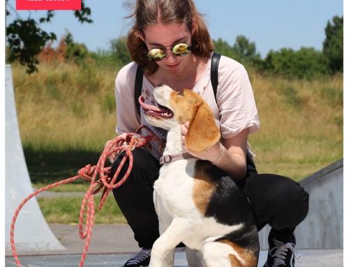 Pourquoi le chien est indispensable à l'Homme ?