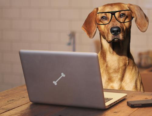 Pourquoi les chiens sont les idoles des vidéos Internet ?