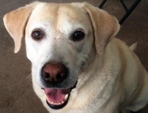 Toutou héro : «Mon chien m'a défendue face à un agresseur»