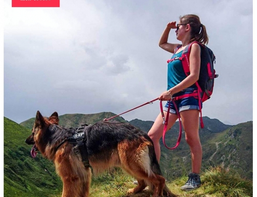 Nos incroyables toutous : les chiens sauveteurs