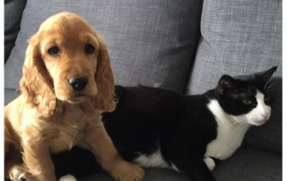 photo d'un chien et d'un chat