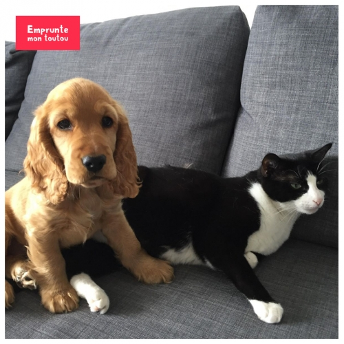 photo d'un chien et d'un chat