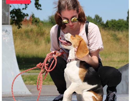 Les bénéfices d'être maître et emprunteur de chien – Le guide pratique du maître de chien :