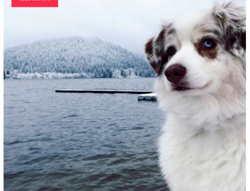 Quelles races de chien supportent mieux le froid ?