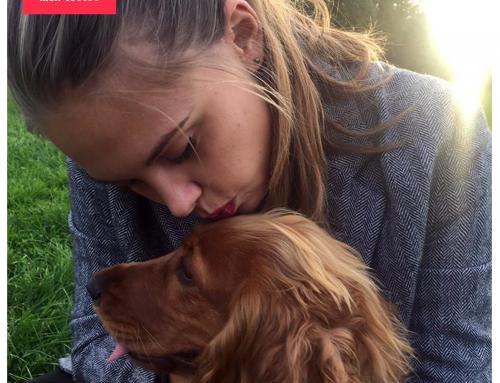 Pourquoi garder un chien ? – Le guide pratique de l'emprunteur