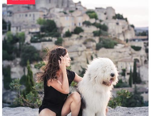 Comment garder un chien ? – Le guide pratique de l'emprunteur