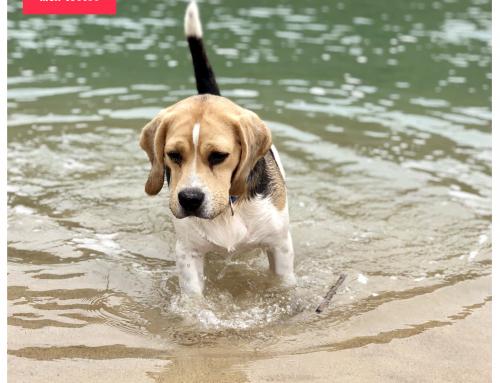 5 Conseils pour emmener votre chien à la plage