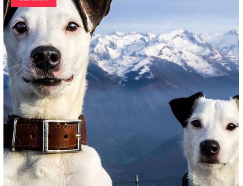 Est-ce mieux d'adopter deux chiens en même temps ?