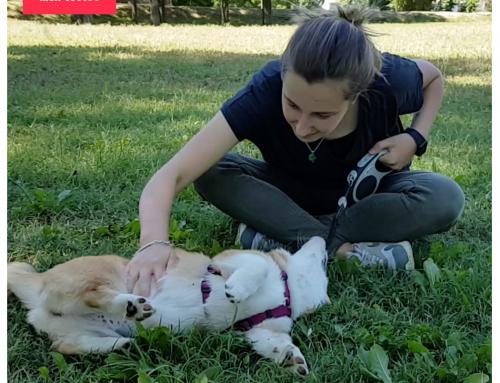 Avis des volontaires pour la garde de chien sur Emprunte Mon Toutou