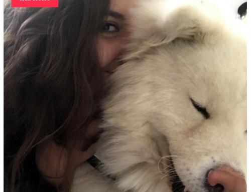 Avoir un chien et vivre seul
