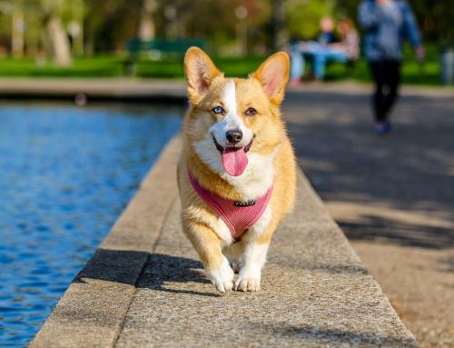 Le saviez-vous ? : 5 anecdotes sur les chiens…