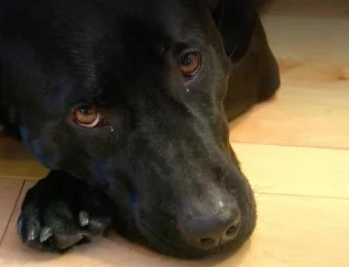 Une octogénaire sauvée par un chien durant la vague de froid sans précédent qui a touché les Etats-Unis en janvier 2019.