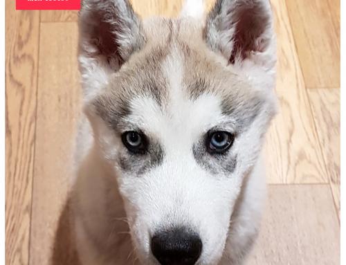 Le caractère de nos toutous : les chiens dociles