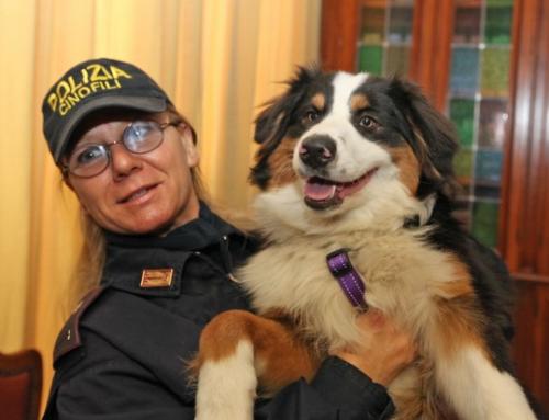 Un Berger australien sauve 6 personnes à Gênes