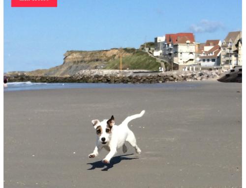 Avoir un chien et courir