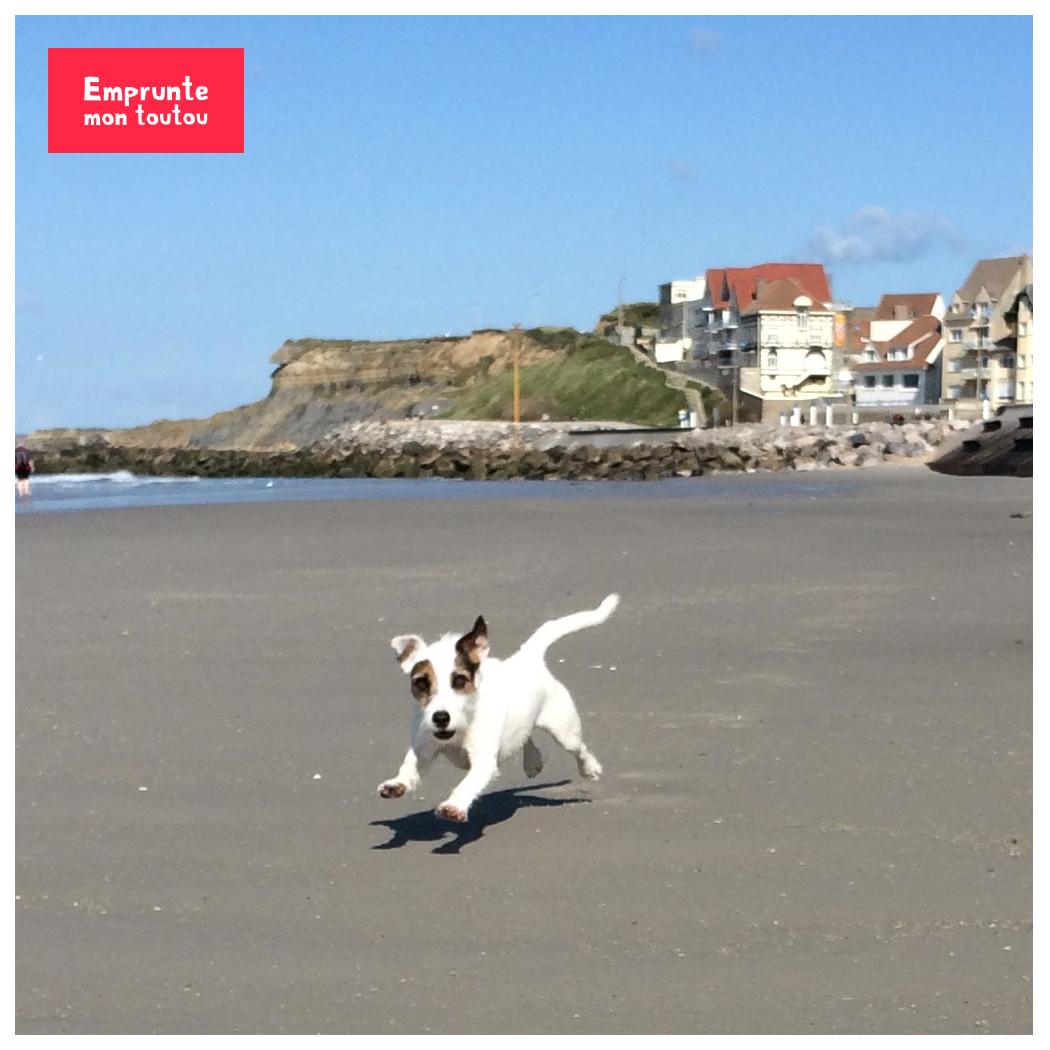 chien qui court sur une plage