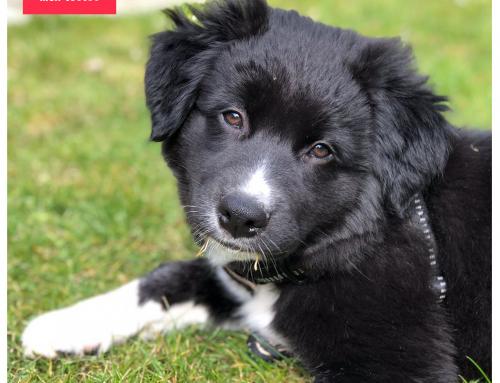 Conseil du lundi #26: comment prendre une belle photo de mon chien?