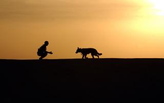 chien et homme dans le désert
