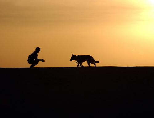 Gobi, chienne marathonienne