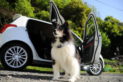 photo de chien assis devant une voiture