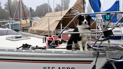chien assis sur un voilier