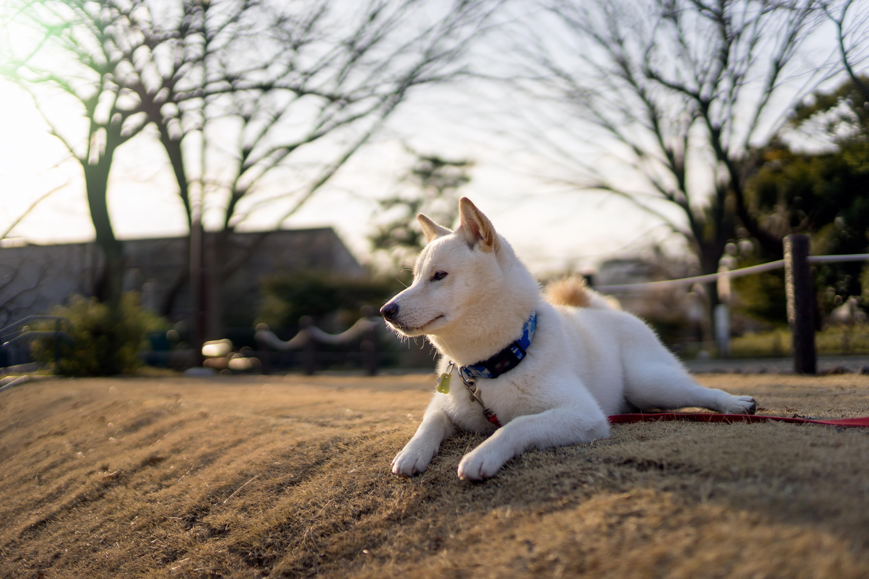 photo de chien blanc couché