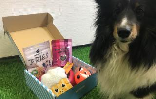 photo de la woufbox avec un chien