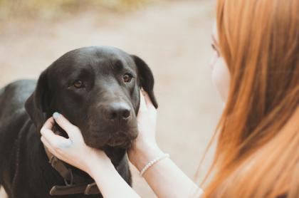 chien noir se faisant caresser par jene femme
