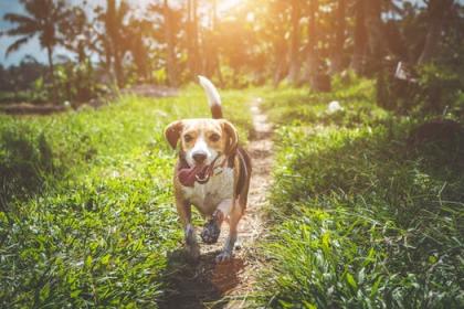 chien courant dans une forêt