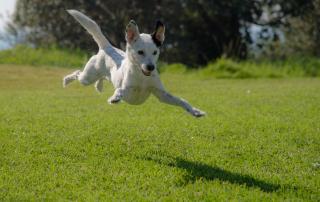 chien en train de sauter