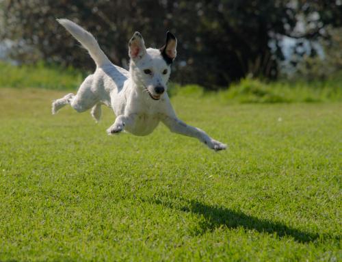 Faire une activité avec son chien : l'Obérythmée