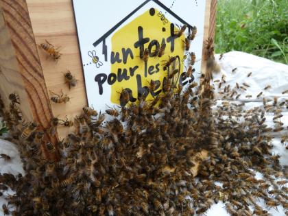 photo de ruche et d'abeilles