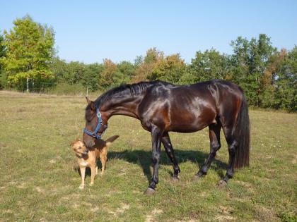 chien et cheval se disant bonjour
