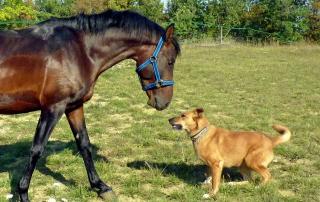 photo de chien et de cheval