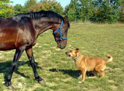 photo de chien et cheval