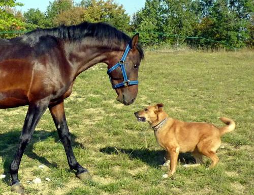 Avoir un chien et un cheval