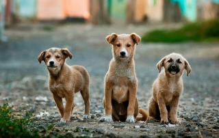 photo de 3 petits chiens