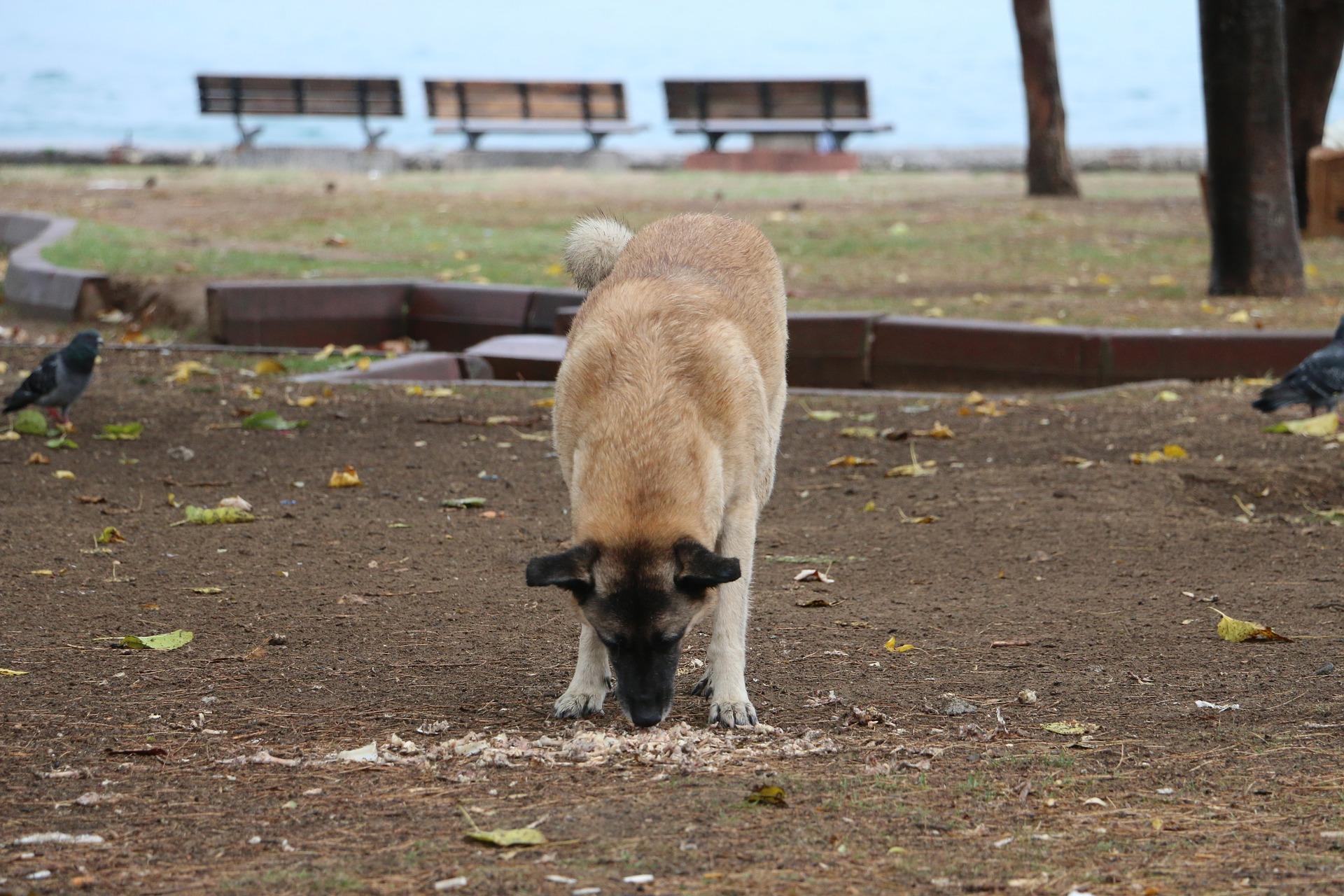 chien mangeant quelque chose par terre