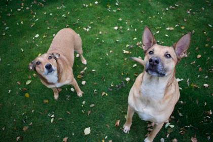 photo de 2 chiens dans l'herbe