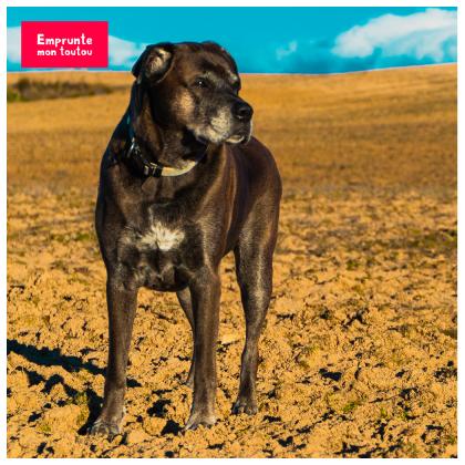 photo de chien dans un champ