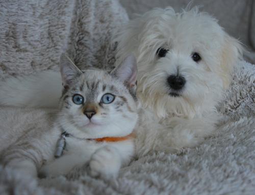 Le chien peut-il cohabiter avec d'autres espèces animales ?